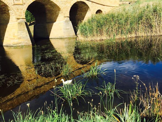 趣味河岸小河无边,桥边四周野鸭子成群嬉戏,桥下则是草坪淌水用字母表示数绿意教学设计图片