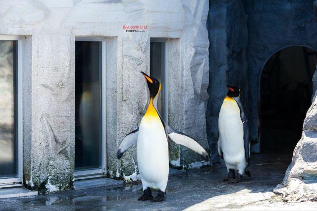 壁纸 动物 企鹅 640_426