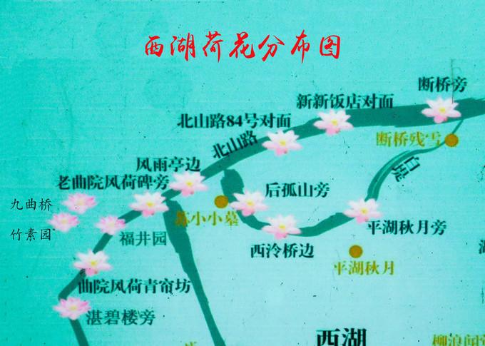 杭州西湖赏荷攻略