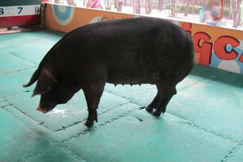 囧囧猪的钩织图解