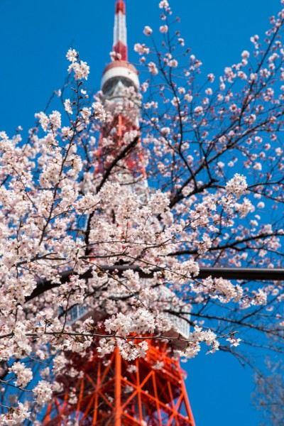 东京塔是一座是以巴黎埃菲尔铁塔为范本而