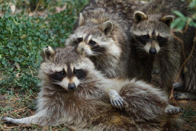 拍的不错,明天还来不?还有熊猫、大象、金丝猴、绿孔雀、小熊猫、长颈鹿好多动物没看呢! 就快到六一了,如果你家有宝宝,就带他们来野生动物园吧,二毛在此恭候你们,带你们看更多的动物,体验各种惊喜,普及动物知识。 云南野生动物园位于昆明市完家山金殿国家森林内,距离市中心7公里,距离长水国际机场30公里,是目前我国最大的野生动物园之一,拥有200余种10000多头(只)的野生动物,大部分采取野生放养,游客不仅可以参观,还可以同动物互动,既能掌握动物知识,还充满自然和谐的乐趣。 来昆明别忘了去云南野生动物园,带