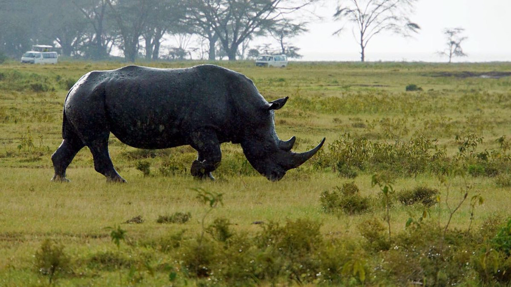 肯尼亚--动物的王国.纳库鲁和马赛马拉