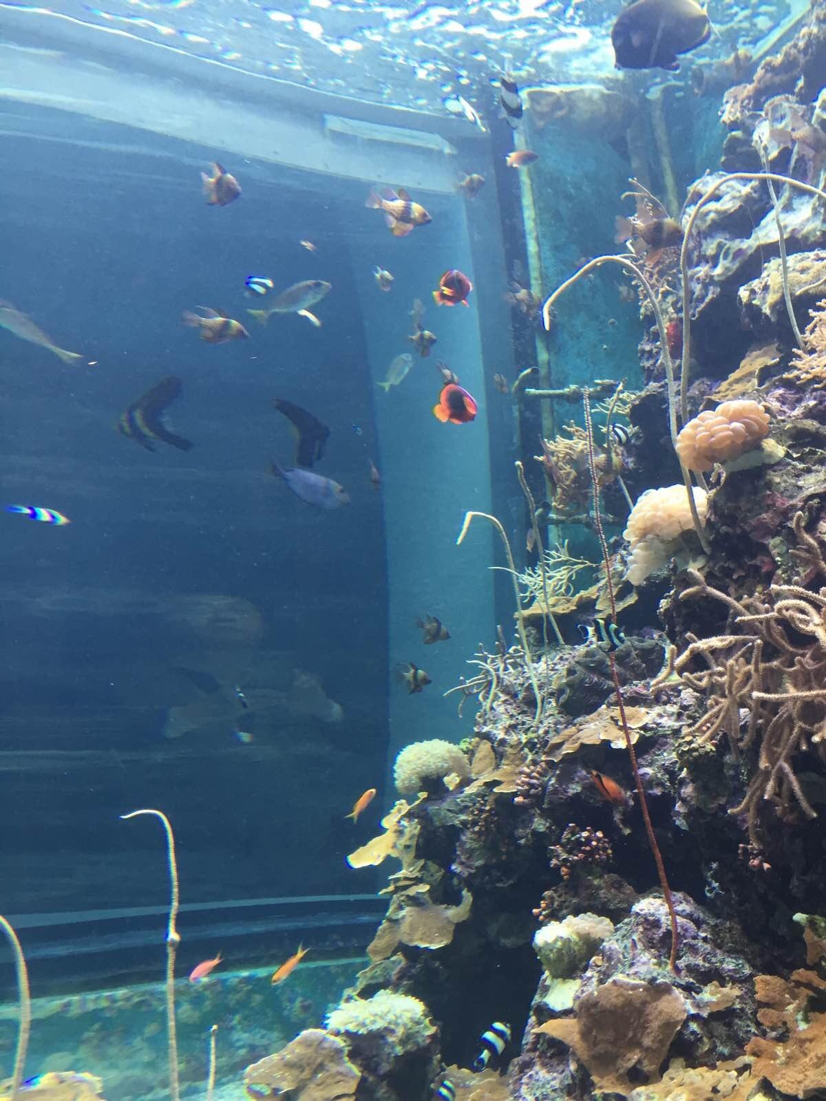 壁纸 海底 海底世界 海洋馆 水族馆 桌面 1200_1600 竖版 竖屏 手机
