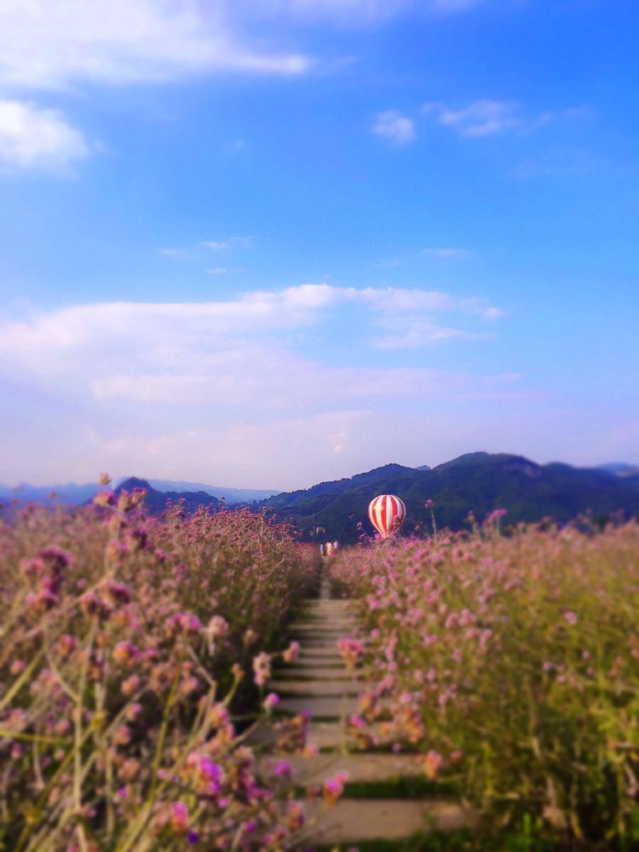 紫色的浪漫,粉红的回忆一一一贵州黔北花海一日游