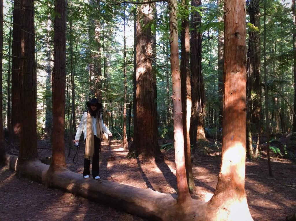 红木森林公园                                     红木森林,这里