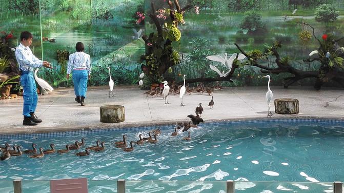 广州游记-长隆野生动物园