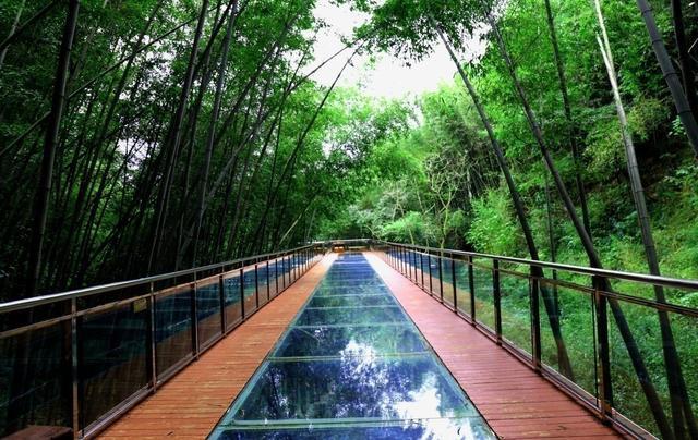 您不必长途跋涉去宜宾蜀南竹海就能体验感受和翡翠长廊相媲美的竹海