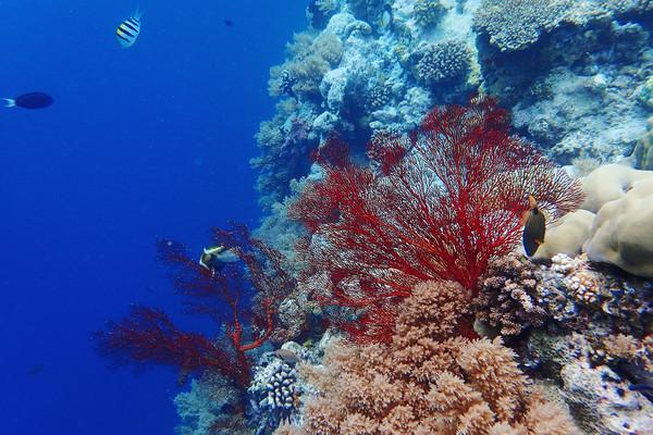 还看到可爱的小丑鱼尼莫~只要有海葵的地方就能看到它们哦