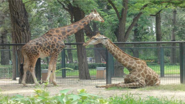 北京动物园爬虫馆改变过没有