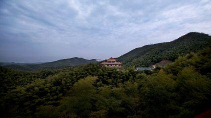 桃花江竹海风景区