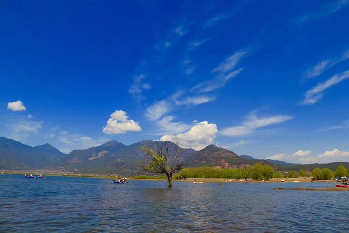 海边柳树建筑风景图片