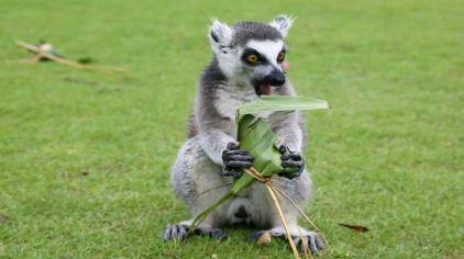 上海野生动物园里可爱的动物们也收到了端午大福利,对着各色符合它们