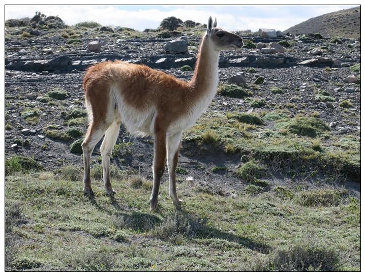 智利百内公园的动物世界