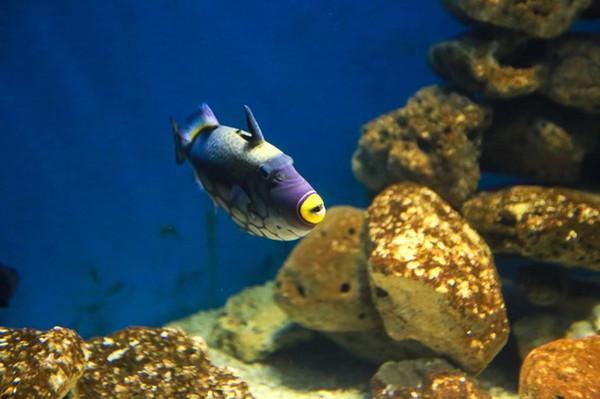 壁纸 动物 龟 海底 海底世界 海洋馆 水族馆 600_399