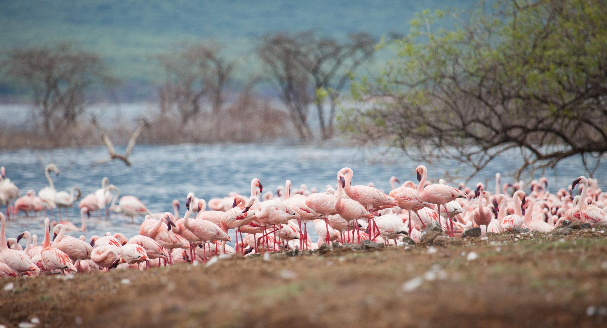 博戈里亚湖  Lake Bogoria   -1
