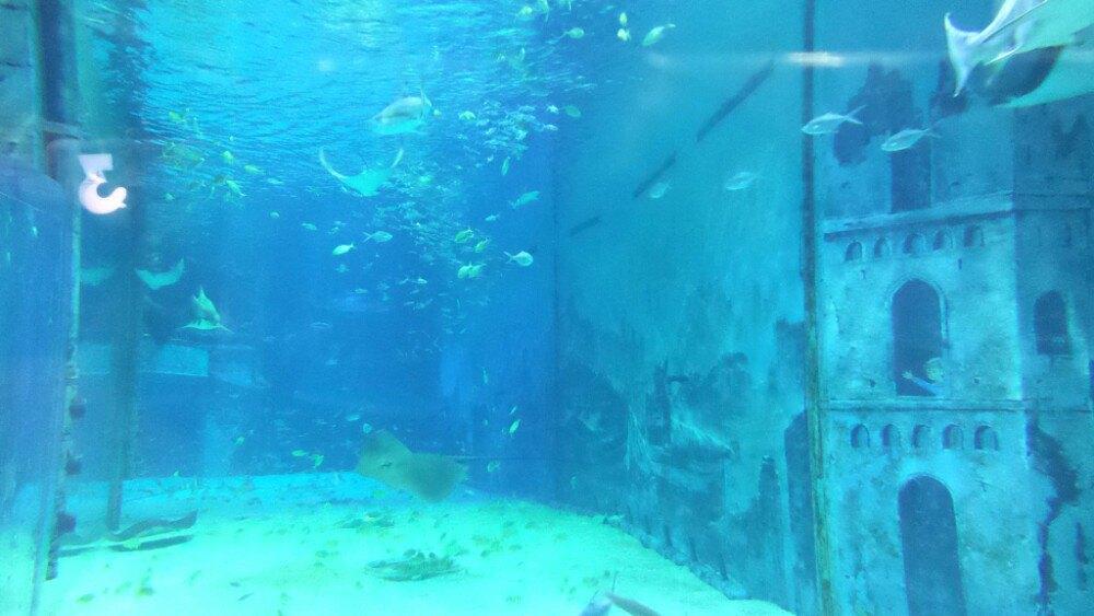 北京小朋友的天地:动物园+海洋馆