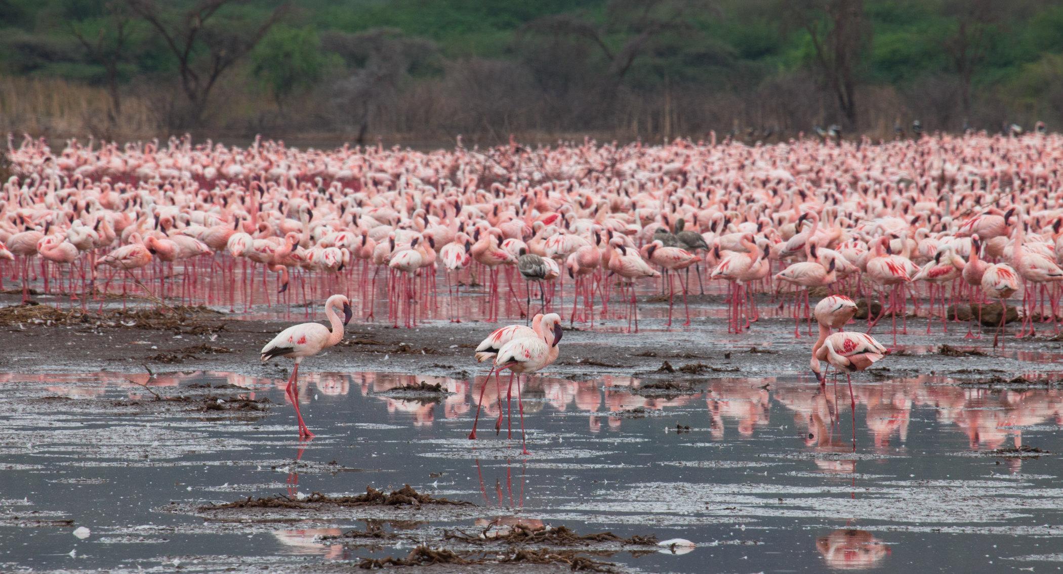 博戈里亚湖  Lake Bogoria   -0