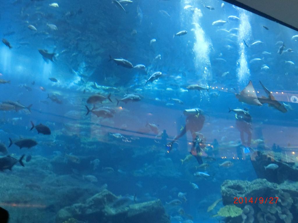 迪拜海底酒店ppt