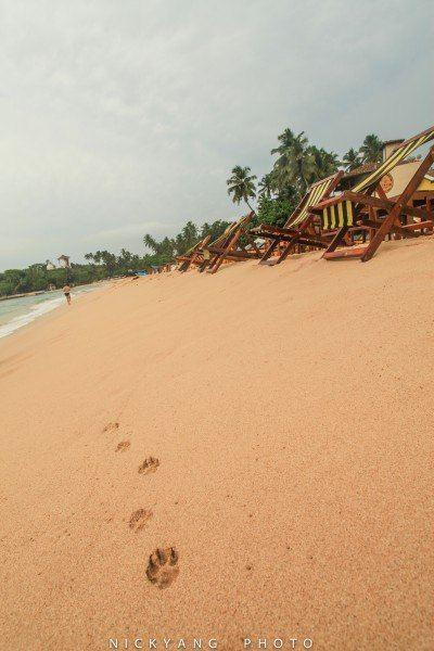 走在沙滩上看到的脚印,猜猜是什么动物的