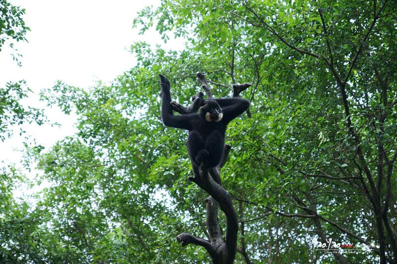 来长隆野生动物园,一起寻找《奇妙的朋友》! - 广州