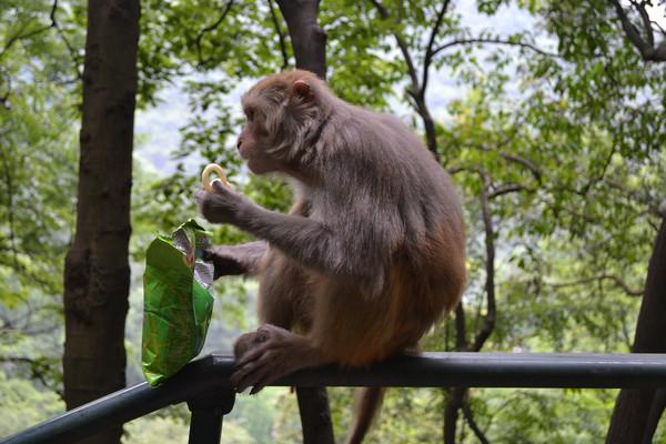 发现动物公园动物之心