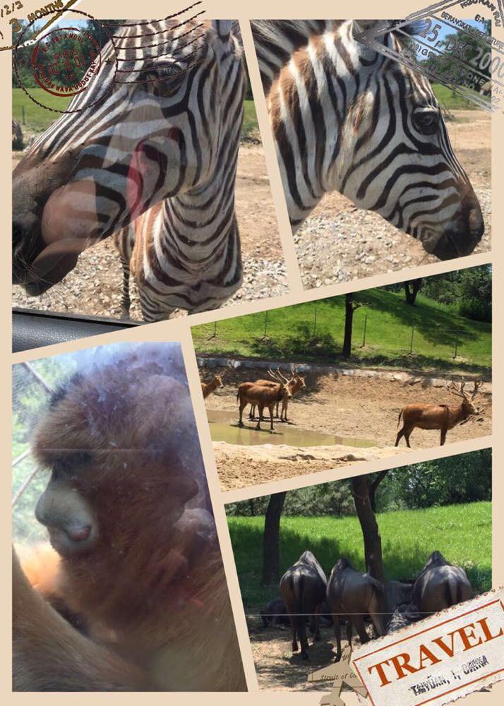 亲子好去处|北京野生动物园一日游