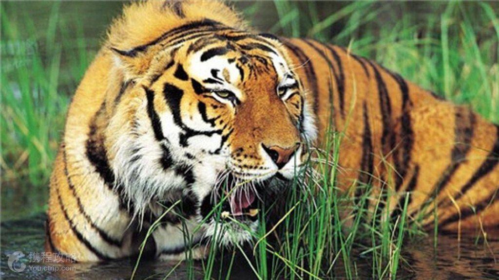 北京2日1晚跟团游·北京大兴野生动物园1日游