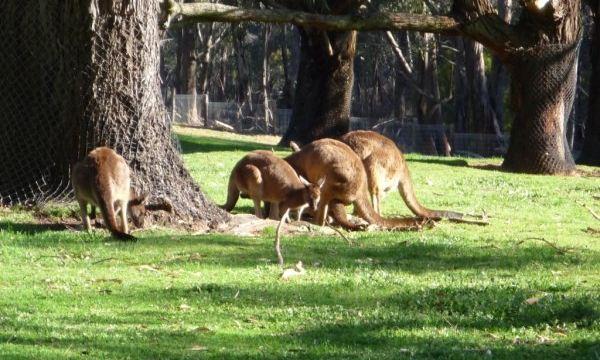 克雷兰野生动物园门票