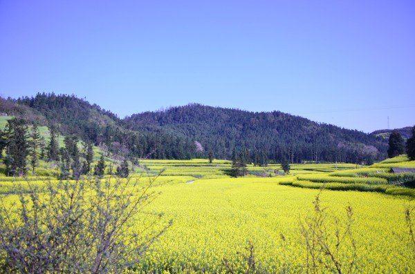 贵州春天风景图片大全