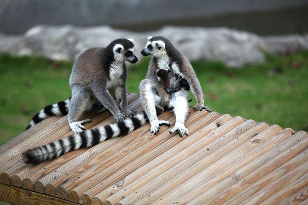刘立军园长 五月,与新生萌宠相约广州动物园