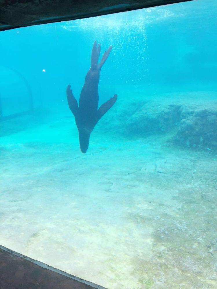 海底餐厅吃午