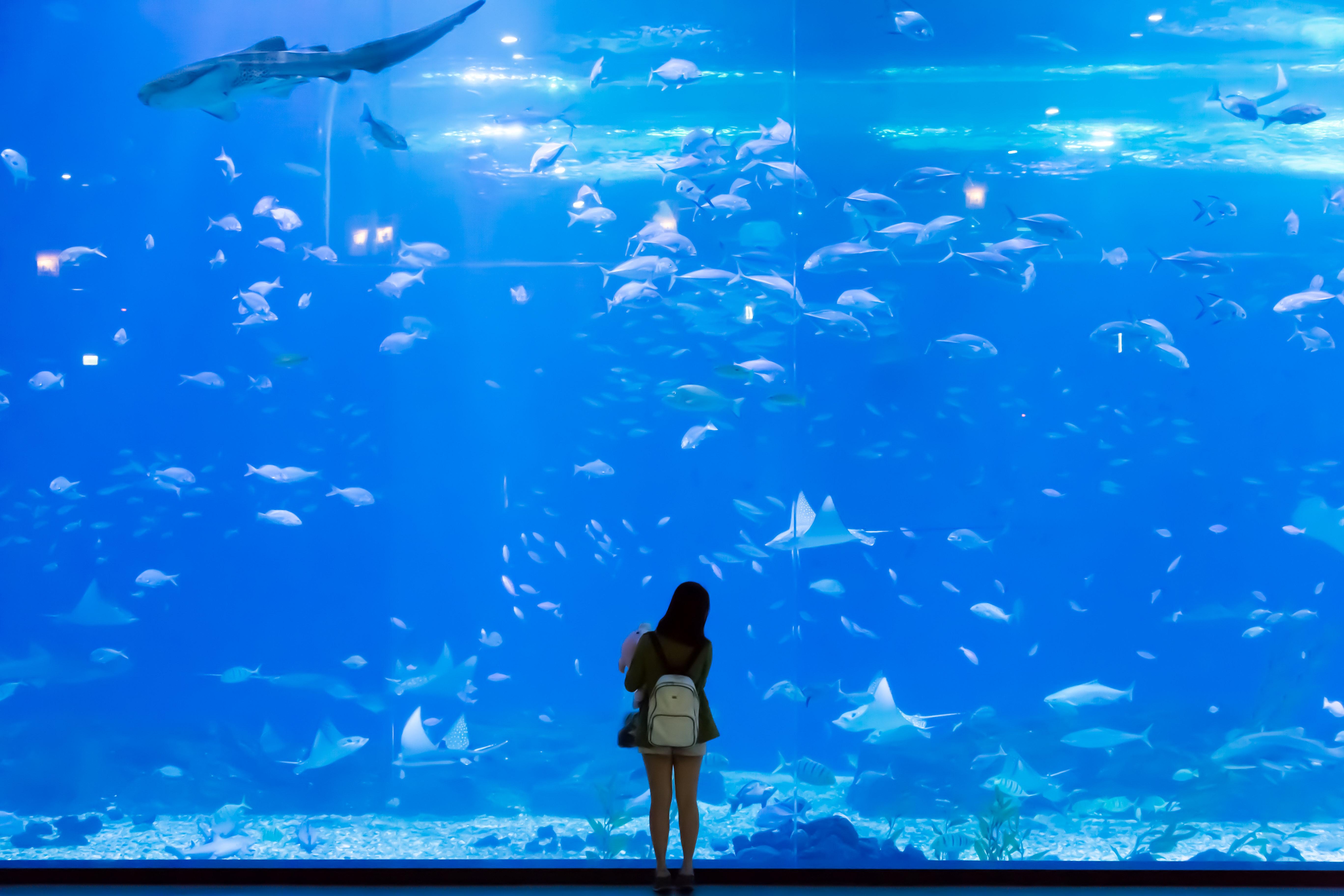 壁纸 海底 海底世界 海洋馆 水族馆 桌面 5472_3648