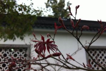 迷失花攻略:扬州-南京-南京(1)-镇江局里游记【英国旅行购物攻略图片