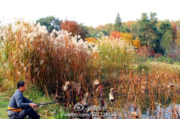 武汉植物园最美秋景