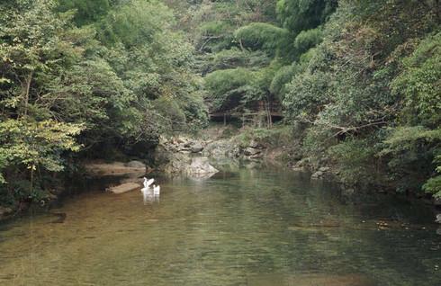 两个攻略的自驾游~~上海杭州塔川剑灵牯牛降搬西洛版本宏村女人砖图片