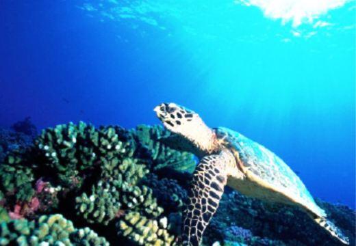 【潜水胜地】大溪地提克豪梦幻海底深潜体验30分钟
