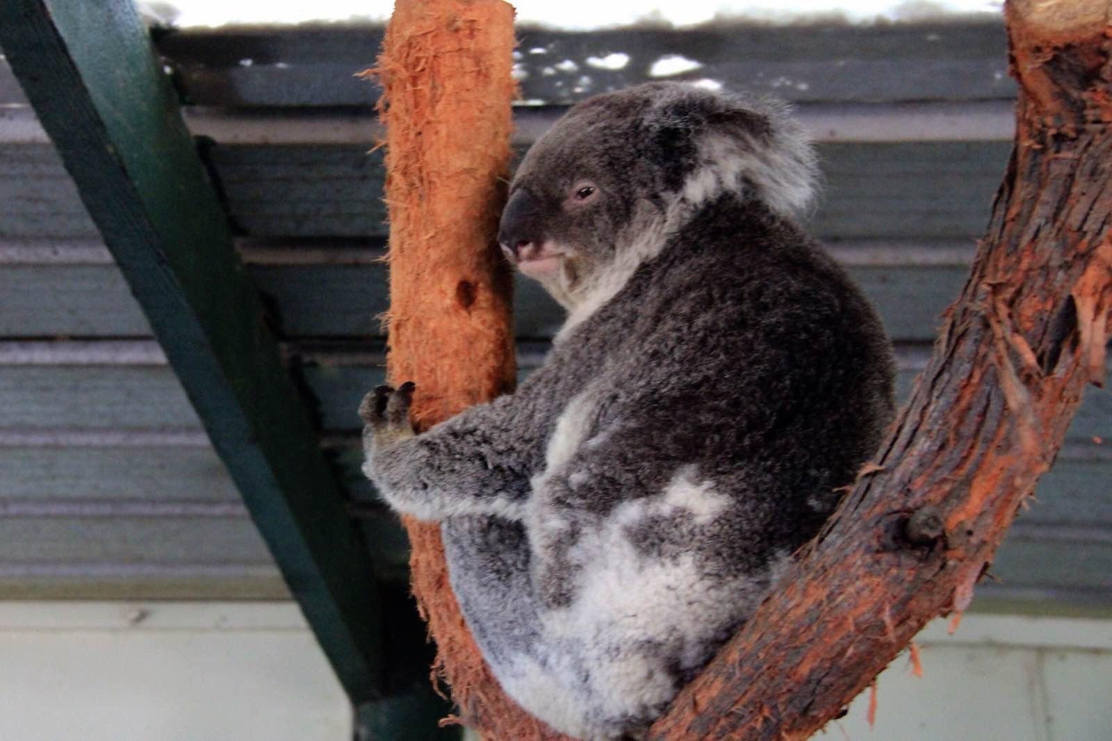 悉尼野生动物世界 蓝山国家公园内生长著大面积的原始丛林和亚热带雨