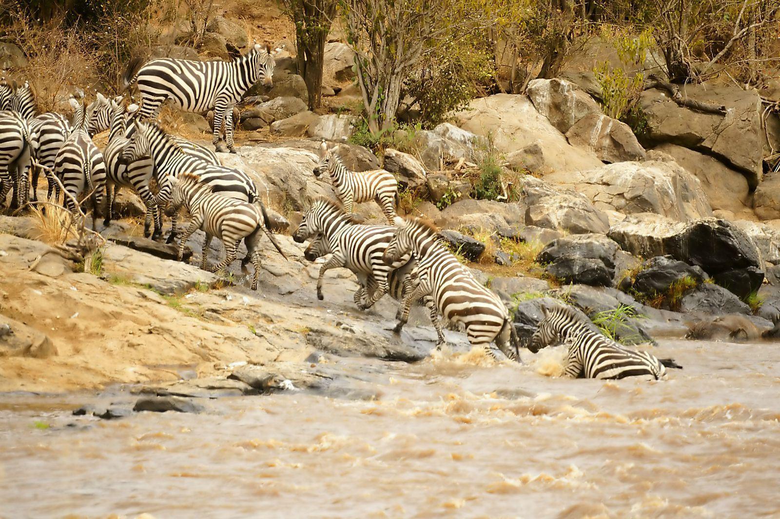 马拉河  Mara River   -1