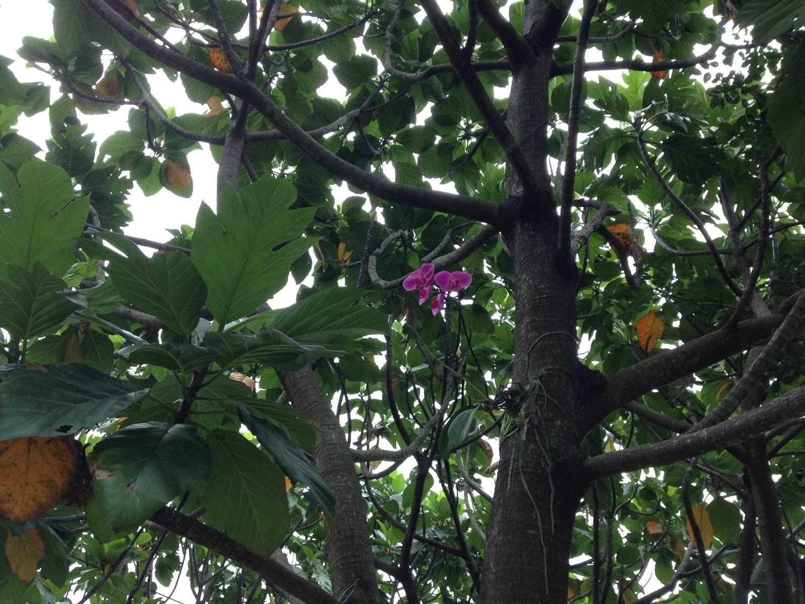 长在树上的兰花