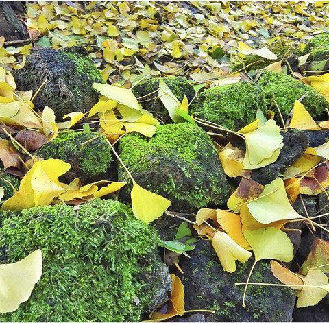 叶子间透着静谧的光,早上的银杏村,是光与影的世界,阳光透过树叶