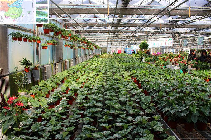 就是将许多不同种类的花卉汇集到大棚的一种种植技术