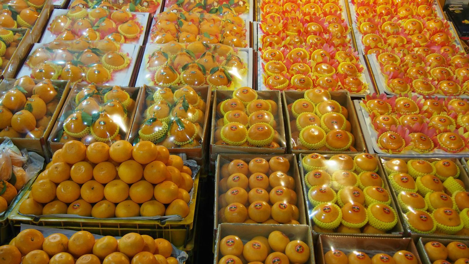 都是济州岛橘子林里产的橘子