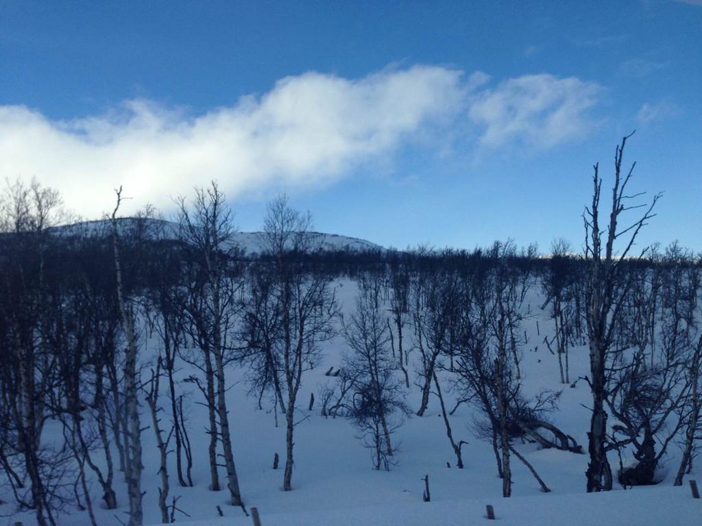 挪威 木结构建筑treet