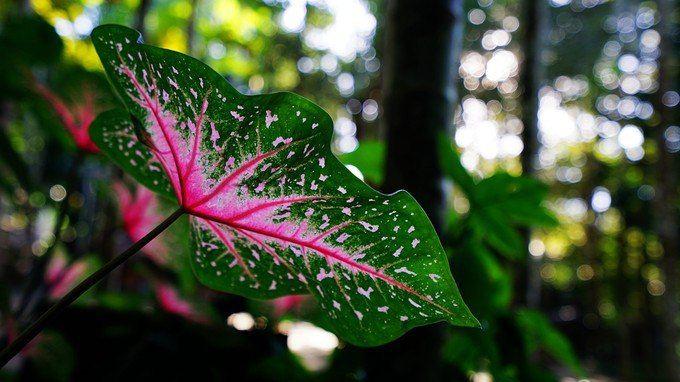 热带雨林不好看,但是热带的植物还是很奇特的