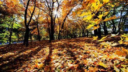 1公里# 蟒山国家森林公园是北京市面积最大的国家级森林公园,是秋天登