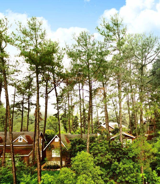 度假村内设有松果庄园酒店和松鼠园木屋别墅,木屋别墅24套,温泉别墅图片