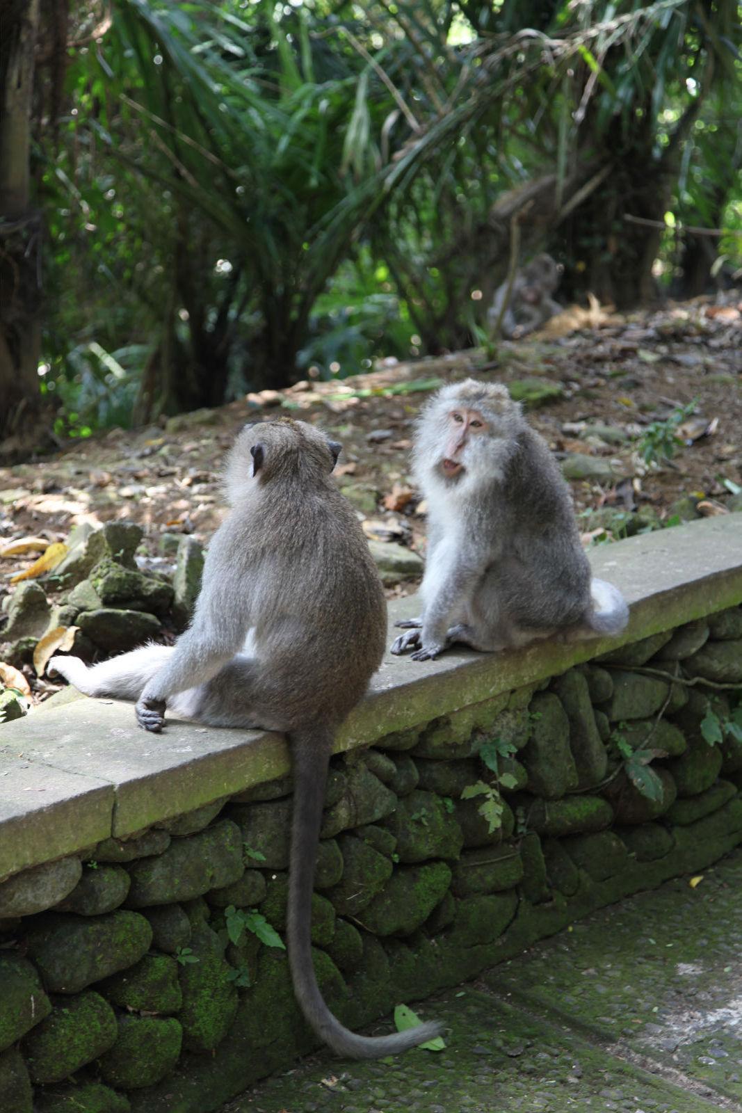 悠然巴厘岛(1)