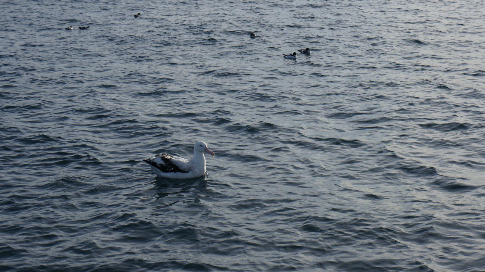 tip:坐船出海观鲸鱼也好,海钓也好,在海面上起伏都很大,大家估摸着