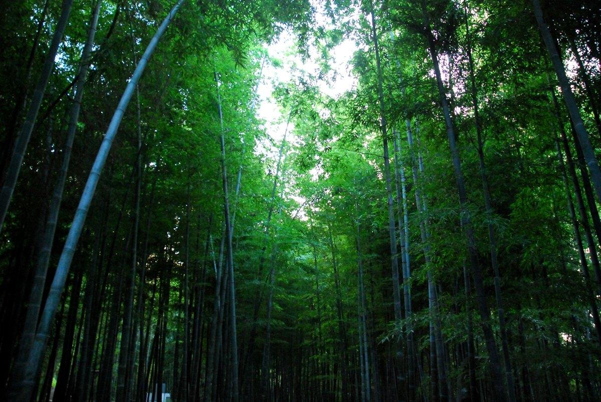 壁纸 风景 森林 植物 桌面 1200_803